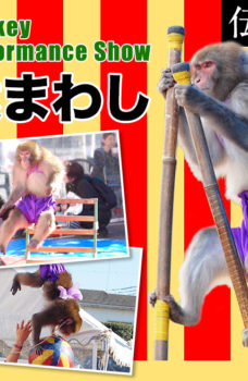 Monkey performance/猿回し